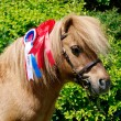 Stock Photo: Champion Pony
