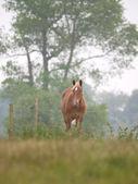Single Horse in Spring Paddock — Stockfoto