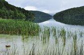 Plitvice lakes of Croatia - national park — Stock Photo