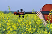 Cello orchestra musical instrument on the field of flowers — Stock Photo