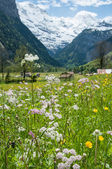 Nature in Swiss — Stock Photo