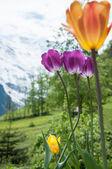 Nature in Swiss — Stock Photo