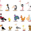 Set of cute cartoon birds — Stock Vector