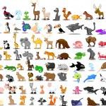 Lion, kangaroo, giraffe, elephant, camel, antelope, hippo, tiger, zebra, rhinoceros — Stock Vector #36344759