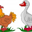 Chicken and Duck, living on a farm — Stock Vector #36347559