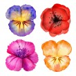 Watercolor painted flower design elements — Stock Photo