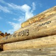 Timber logs in depot — Stock Photo #13862438