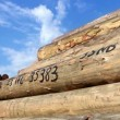 Stock Video: Timber logs in the depot
