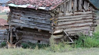 Anatolian old shack villager house in the forest — Stock Video