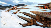 Timber logs in the forest — Stock Photo