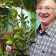 Portrait of a smiling senior man looking after houseplant lemon — Stock Photo