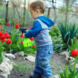 Cute baby boy irrigating flowers in colorful garden — Stock Photo #13549294