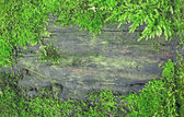 Old dirty wooden texture in moss frame — Stock Photo