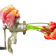 Birth of the beauty. conceptional image of grinder making flowers from clot — Stock Photo