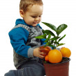 Small baby boy playing with orange fruits and plant, isolated on white — Stock Photo #13550512