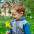 Cute baby boy holding a bunch of dandelion flowers on spring meadow - Stock Photo