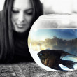 Colored angelfish in bowl with reflected unban scene - Stock Photo