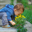 Cute baby boy sniffing dandelion flowers in spring park — Stock Photo