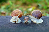 Snail family analogy — Stockfoto