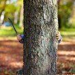 Little malefactor baby with stick in hand hiding behind the tree. autumn p — Stock Photo #13672892