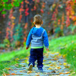 Little baby boy walking away in colorful autumn park — Stock Photo #15548701