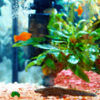Stock Photo: Echinated newt in colorful aquarium, Pleurodeles waltl