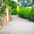 Spring blooming sidewalk — Stock Photo