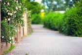 Spring blooming sidewalk — Stock Photo