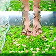 Fish pedicure spa treatment, rufa garra fish — Stock Photo #27466635