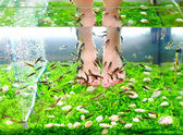Fish pedicure spa treatment, rufa garra fish — Stock Photo