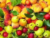 Mix of fresh summer fruit — Stock Photo