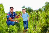 Farmer family harvesting vegetables in garden — Stock Photo
