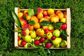 Fresh summer fruit in crate on grass — Stock Photo