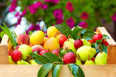 Mix of fresh summer fruit in crate — Stock Photo