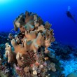 Coral reef — Stock Photo #13400777