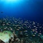 Shoal of small fish — Stock Photo