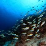 Shoal of fish — Stock Photo
