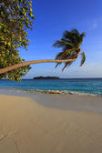 Maldivian island — Stock Photo