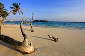 Maldivian island — Stock Photo