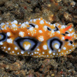 Sea slug — Stock Photo