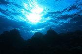 Estrutura coral — Foto Stock