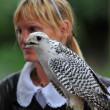 Female Falconer — Stock Photo