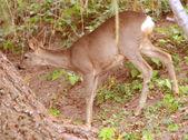 Fawn near tree — Stock Photo