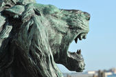 Lion roaring — Stock Photo