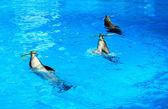 Dolphin hoop — Stock Photo