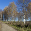 Autumn Landscape with birches — Stock Photo #35068509