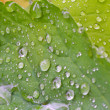 Dewdrop — Stock Photo