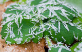 Icy morning dew — Stock Photo