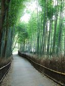 Road in bamboo forest — Stock Photo