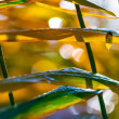 Sedge in autumn morning dew — Stock Photo